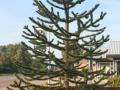 slangenboom 3